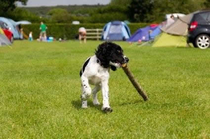 Cotswolds Camping
